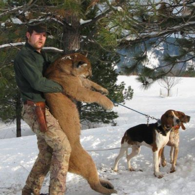 Idaho Mountain Lion Guided Hunts