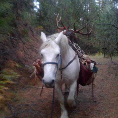 Guaranteed Elk Hunts Idaho