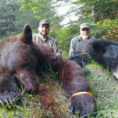 Giant Idaho Black Bears