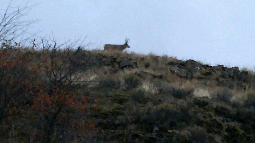 Idaho Whitetail Hunts