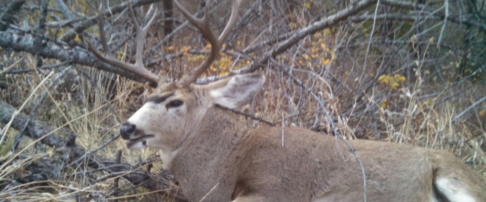 Guided Mule Deer Hunts in Idaho