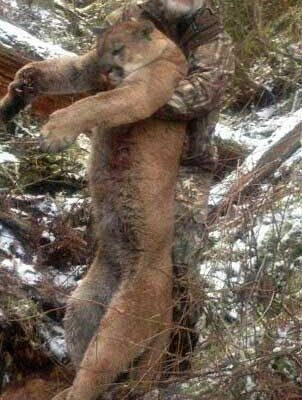 Cheap Mountain Lion Hunts