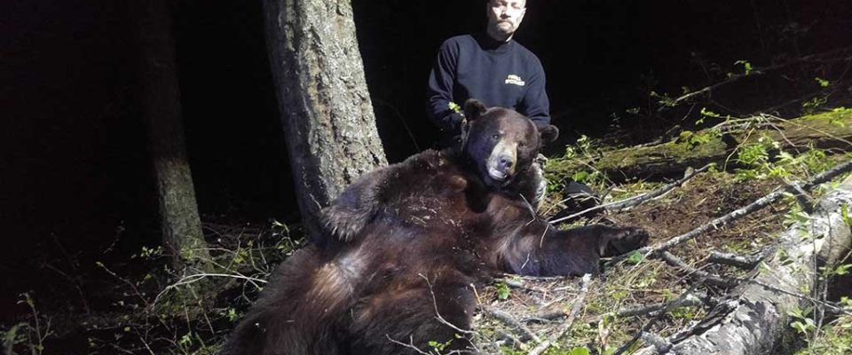 Guided Black Bear Hunts in Idaho