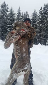 Mountain Lion Hunting Outfitters