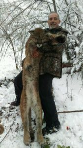 Idaho Cougar Hunts with Hounds