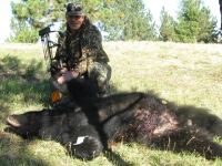 Central Idaho Black Bear outfitters hunt with Hounds.