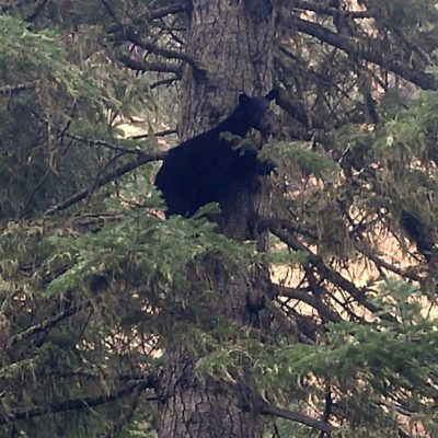 Spring Black Bear Hunts