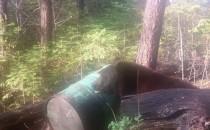 Color Phase Bear Hunt