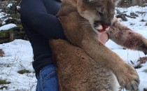 Another Successful Mountain Lion Hunting Season in Idaho