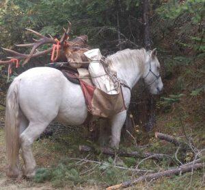 Book Your Idaho Elk Hunts