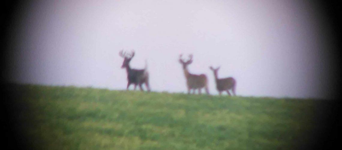Whitetail Deer Ranch Hunt